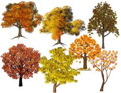 Fall Tree Pack Four Seasons Image Fall Tree by DigitalArtMovement
