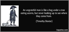 An ungrateful man is like a hog under a tree eating acorns, but never looking up to see where they come from. (Timothy Dexter) #quotes #quote #quotations #TimothyDexter