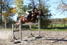 7 year old off the track Standardbred gelding. Pacer, 15.3hh currently schooling 4'6