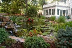 Backyard Water Gardens: One needs to be there to appreciate the sounds of the water and the falls – plus the birds singing and the frogs croaking -- and to watch the koi swimming around.