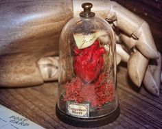 Sculpture Anatomic Heart in a Bell Jar Miniature Darkly Romantic Odd Gift by damnfrenchdesserts on Etsy https://www.etsy.com/listing/119309364/sculpture-anatomic-heart-in-a-bell-jar
