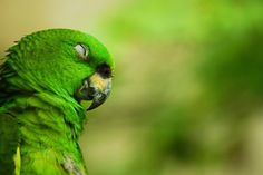 Image result for sleeping parrot