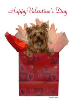Personalize any greeting card for no additional cost! Cards are shipped the Next Business Day. Product ID: 131713 Yorky, Teacup Yorkie, Baby Animals Pictures, Yorkie Dogs, Yorkshire Terrier, Happy Day, Happy Valentines Day, Greeting Cards, Baby Girls