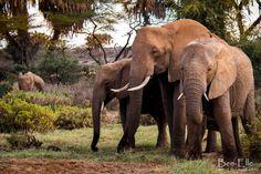 Family of gentle giants