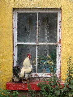 photo ... paned window on a yellow wall ... red window sill with a rooster ... some folliage ...