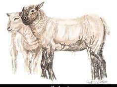 "SERIES: Farm Animals TITLE: ""Whispering lambs"" MEDIUM: Watercolour"