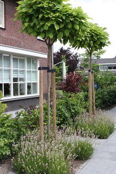 Beplanting-lavendel-en-catalpas.jpg (JPEG-afbeelding, 720 × 1081 pixels)