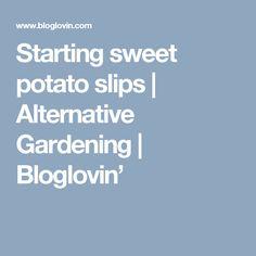 Starting sweet potato slips | Alternative Gardening | Bloglovin'