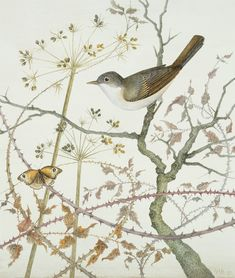 Our advent artwork today is the glorious 'Whitethroat and Meadow Brown', watercolour and acrylic on gesso coated board, x x by Harriet Bane Tawny Owl, Black Capped Chickadee, Asian Elephant, Canvas Paper, Bane, New Art, It Works, Birds, Watercolor
