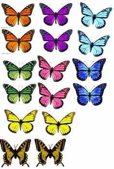 PERFECT FOR WEDDING CAKES & CUPCAKES Monarch Butterfly 3D Edible Image Cupcake Toppers null,http://www.amazon.com/dp/B00EHJU4LU/ref=cm_sw_r_pi_dp_PlIBtb1PC6GQRVT4