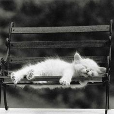 Cat nap, what a week its been Animals And Pets, Baby Animals, Funny Animals, Cute Animals, Pretty Cats, Beautiful Cats, Animals Beautiful, Cute Little Kittens, Kittens Cutest