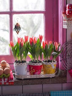 *Tulips in the window