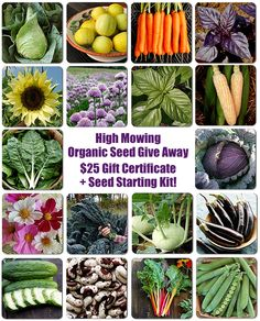 Great seed starting giveaway from my friends at High Mowing Organic Seeds, just in time to start the garden!