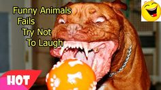 Funny Animals Fails 17   Try Not To Laugh Challenge   Compilation Vines