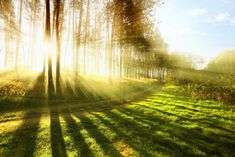 "SOUND: https://www.ruspeach.com/en/news/6848/     ""Будьте светом сами себе.""   ""Be your own light.""       © Будда. Buddha      свет [svet] - light     www.ruspeach.com"