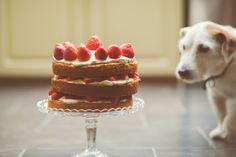 INo Caption Needed#easybakencook #food #foodporn #recipe #cooking #recipe #cook #foodie #yummy #delicious #baking #cake #desserts #cookies #cupcakes #chocolates #foodrecipes #cookbook #germanfood #schnitzel #beer #dinner #bake #foodblogger #food blog #foodpic