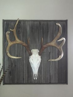 deer mount on an old barn door.