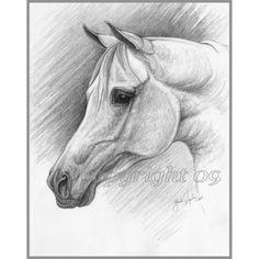 Grey Arabian Horse Drawing
