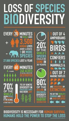 Celebrate the International Day for Biodiversity, take action! Loss of Biodiversity [Infographic] Teaching Science, Life Science, Science Art, Teaching Ideas, Save Our Earth, Environmental Education, Environmental Degradation, Environmental Pollution, International Day