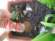 Fertilizzo la terra con tè e cannella