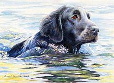 """""""Flat Coat Swim"""" A Limited Edition Flat Coated Retriever Print - Michael Steddum"""