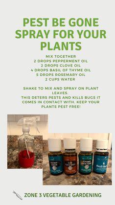 Essential Oil Bug Spray, Thieves Essential Oil, Natural Essential Oils, Young Living Essential Oils, Essential Oil Blends, Easential Oils, Doterra Oils, Oil Garden, Natural Bug Spray