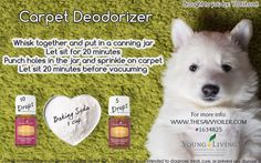 Carpet Deodorizer with Purification and Thieves Young Living Essential Oils | For more information and to order yours, visit:  http://www.thesavvyoiler.com/order-oils/