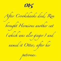 Romione Facts - Harry Potter Fan Art (23944055) - Fanpop
