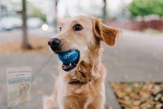 Dog Separation Anxiety, Dog Anxiety, Pet Fashion, Animal Fashion, Loyal Dogs, Most Popular Dog Breeds, The Perfect Dog, R Dogs, Dog Hacks