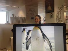 Office Safari 17 #OfficeSafari #FunnyStatus