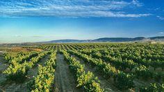 #Rioja