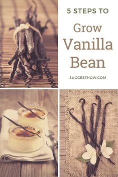 Vanilla is one of the most amazing spices in the world. It grows on the a tall vine plant with white flowers. Here is how to grow vanilla bean. Growing Green Beans, Growing Greens, Growing Herbs, White Flowering Plants, Orchid Plants, Potted Plants, Garden Plants, Planting Vegetables, Growing Vegetables