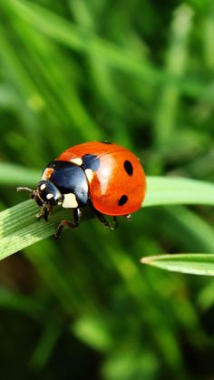 Ladybird life by Žydrūnė Ulinskaitė on 500px