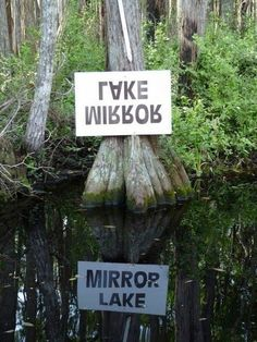 They have a great sense of humor in the Okefenokee Swamp, Florida photo via linda