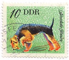 "1976 ""Postage stamp from East Germany"" Sadly, no artist identity found in my search, but for information, visit link: http://www.old-stamps.com/stamps/east-germany/airdale-terrier_53.html"