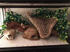The Lifespan of a Bearded Dragon Depends on Proper Care Leopard Gecko Cage, Leopard Gecko Terrarium, Lepord Gecko, Leopard Gecko Habitat, Lizard Habitat, Reptile Habitat, Leopard Gecko Setup, Cute Lizard, Cute Gecko