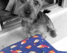 Dog bandana/scarf Red foxes