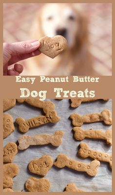 Best 4 Ingredient DIY Peanut Butter Dog Treats Recipe for to celebrate National Love your Pet Day, Feb If you can make cut out cookies you can make homemade dog treats. Dog Cookie Recipes, Easy Dog Treat Recipes, Homemade Dog Cookies, Dog Biscuit Recipes, Homemade Dog Food, Dog Food Recipes, Cookies For Dogs, Best Dog Biscuit Recipe, Peanut Butter Dog Treats
