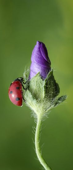 Ladybird. Read into the Vocational arenas of your life. http://youtu.be/bK7NUdh01WY