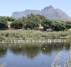 The Raapenberg Bird Sanctuary is a section of the Liesbeek River between the Hartleyvale football ground and the South African Astronomical Observatory. This stretch of the river is parkland, with Astronomical Observatory, Woodstock, Cape Town, Dates, South Africa, Things To Do, Places To Visit, Salt, Southern