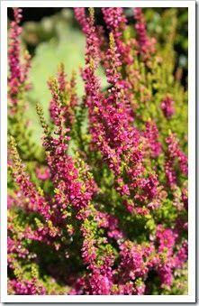 http://fishtailcottage.blogspot.com/2014/08/fishtail-cottages-garden-82514.html