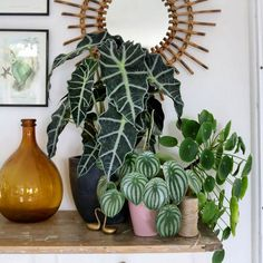 Gardening – Gardening Ideas, Tips & Techniques Indoor Garden, Indoor Plants, Indoor Outdoor, House Plants Decor, Plant Decor, Plants Are Friends, Interior Plants, Green Plants, Big Leaf Plants