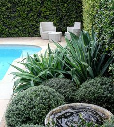 This lush Northern beaches poolside garden consists of groomed Syzygium hedges, a cluster of Beschorneria, tightly clipped Westringia balls and a soothing water feature. Landscaping Along Fence, Front Yard Landscaping, Pool Landscape Design, Garden Design, Terrace Design, Garden Balls, Australian Garden, Garden Maintenance, Garden Pool