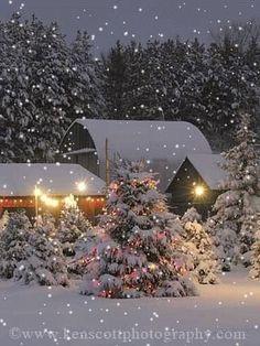 Christmas Tree Farm, Leelanau County, Michigan - Looks like a Winter Wonderland! Christmas Tree Farm, Christmas Scenes, Noel Christmas, Country Christmas, Winter Christmas, Christmas Lights, Christmas Decorations, Outdoor Christmas, Xmas Trees
