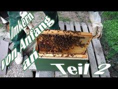 Imkern von Anfang an - Teil 2 - Der erste Ableger - Das erste Bienenvolk - Bienen für Anfänger - YouTube