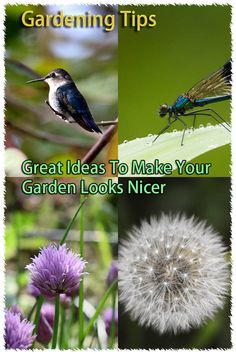 Add Interest To Your Garden With These Useful Tips. -- Continue with the details at the image link.