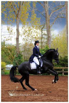 the beauty of dressage  www.thewarmbloodhorse.com. ♥ Pinned with gratitude by www.DressageWaikato.co.nz.
