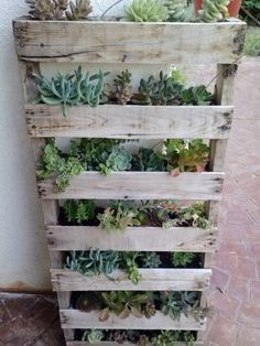 Palate & Succulent