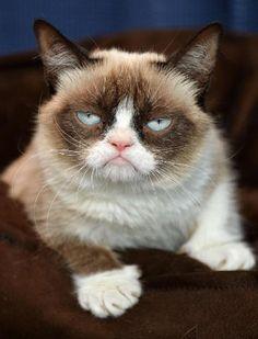 Pense em uma celebridada bem famosa! Agora a transforme em pet. Esse é o caso de Grumpy Cat, uma gata de Morristown, no Arizona, Estados Unidos, que está tendo a fama comparada à Angelina Jolie.