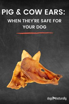 Many popular dog treats are under scrutiny. Treats like rawhide, and even peanut butter are not as innocent as we once thought. So do pig ears and cow ears make the cut in this healthy dog treat revolution? Here's some tips to keep in mind when picking up a chew for your dog.